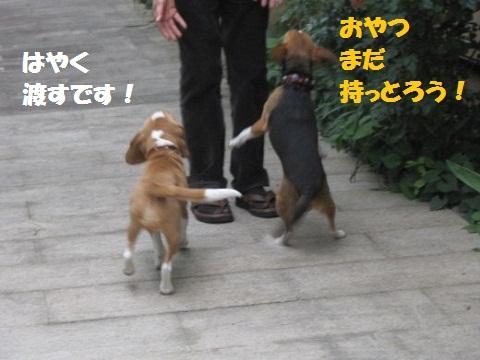 051_20110507084341.jpg