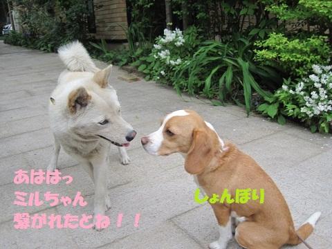052_20110507085853.jpg