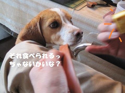 053_20110429101814.jpg