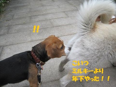 056_20110507085853.jpg