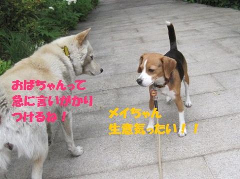 060_20110507085852.jpg