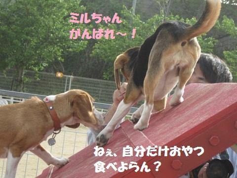 087_20110504113703.jpg