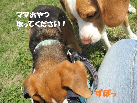 091_20110510085922.jpg