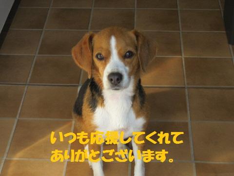 158_20110506115313.jpg