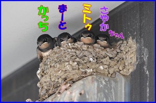 DSC_4821_20110704141828.jpg