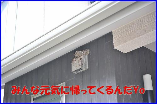 DSC_8789_20110704135506.jpg