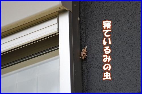 DSC_8795.jpg