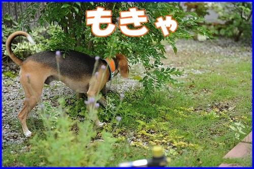 DSC_8809_20110701220640.jpg