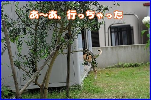 DSC_8811_20110701221101.jpg