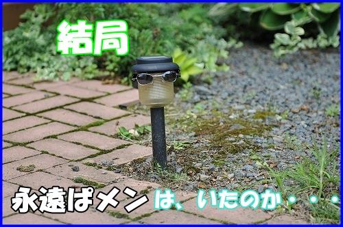DSC_8842_20110701221358.jpg