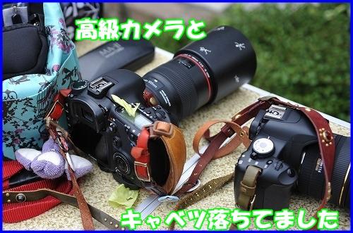 DSC_8857_20110701221157.jpg