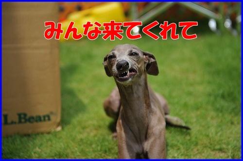 DSC_9036_20110704135947.jpg