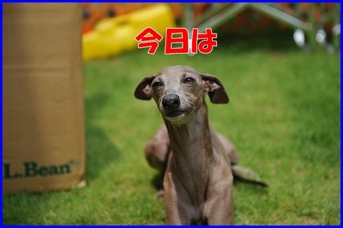 DSC_9037_20110704135946.jpg