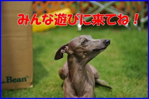 DSC_9039.jpg