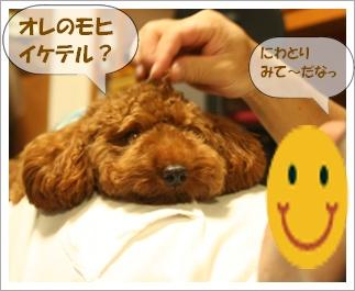 IMG_0008renmohi.jpg