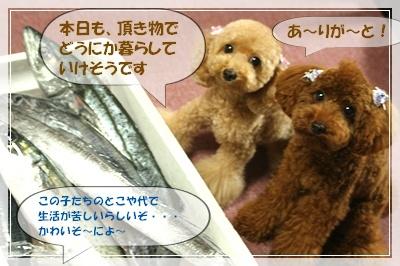 IMG_0015sakana.jpg