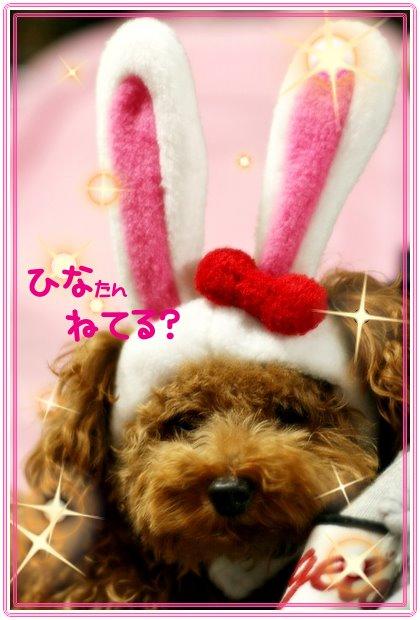 IMG_0301usahina.jpg