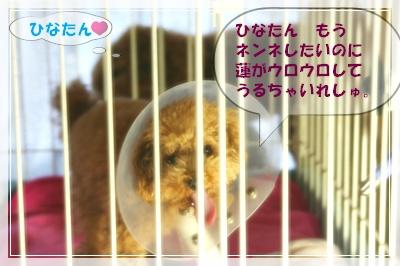 IMG_0307E381B2E381AA.jpg