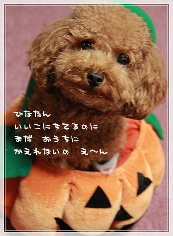 IMG_0970hinay.jpg
