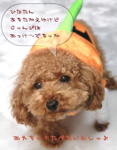 ひなかぼちゃ