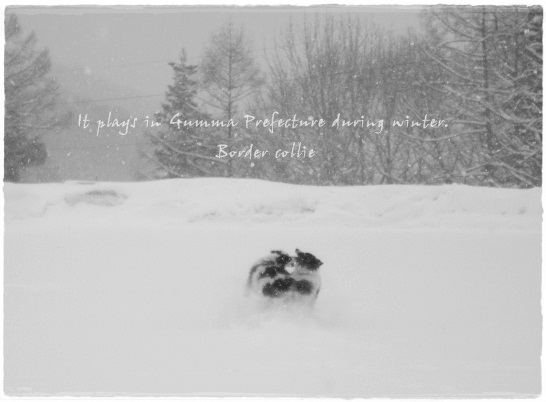 群馬 水上での雪遊び