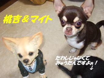 桃吉&マイト