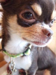 「DOG GARDEN CAFE」