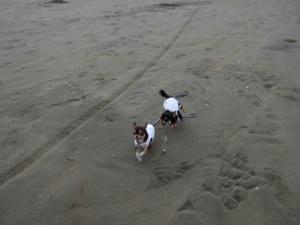 サンビーチ