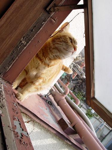 窓ちゃと1