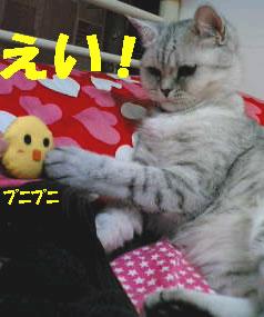 chiko3.jpg