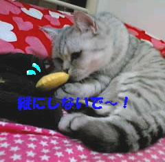 chiko4.jpg