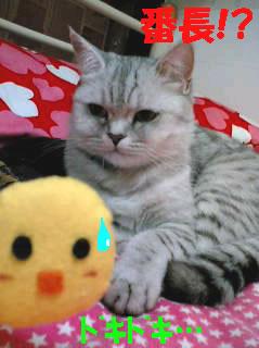chiko5.jpg