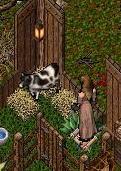 牛とチルダ