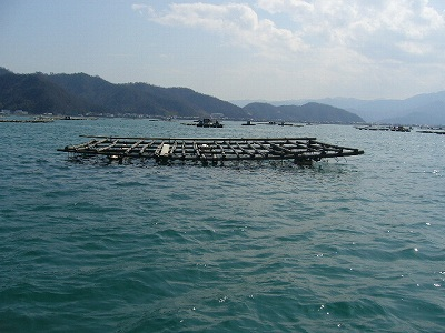 向かいのカキ筏