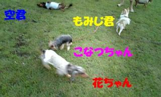 070809_184106_ed.jpg