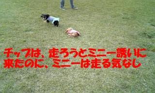 071107_155835_ed.jpg