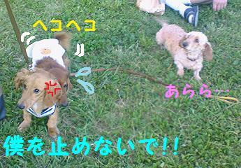 ミニーちゃん3