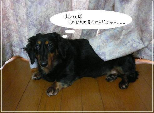 P1330001_チョコちゃん