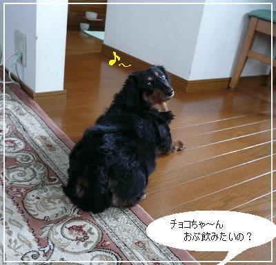 P1320467_bb.jpg