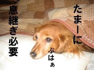 20070115222537.jpg