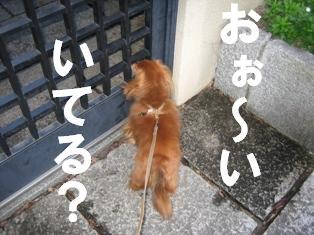 IMG_1390burogu.jpg