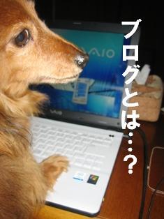 IMG_1479blog.jpg