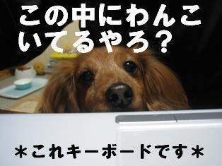IMG_1656burogu.jpg