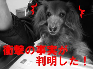 IMG_1668blog.jpg