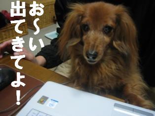 IMG_1670burogu.jpg
