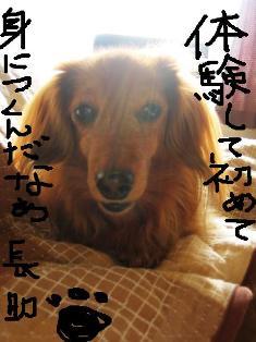 IMG_2014burogu2.jpg