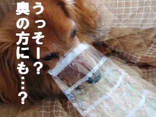 IMG_2092burogu.jpg