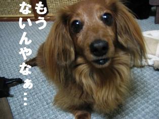 IMG_2099burogu.jpg