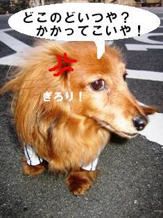 IMG_2161blog.jpg