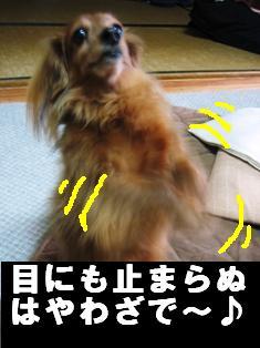 IMG_2179burogu.jpg